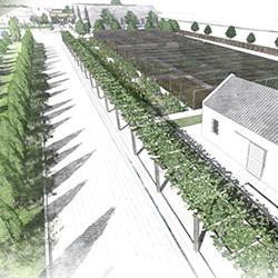 Communal Food Gardens